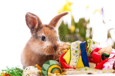 coniglio colorato con uova di pasqua