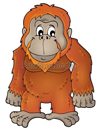 animale mammifero selvaggio natura orango