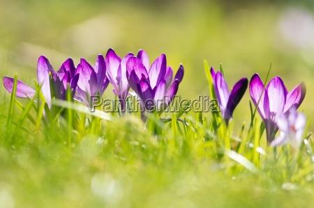 luce ambiente cultura giardino fioritura fiorire