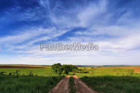 campi colza di primavera fioritura di
