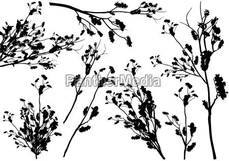 ramo arbusto silhouette filiale pianta piante