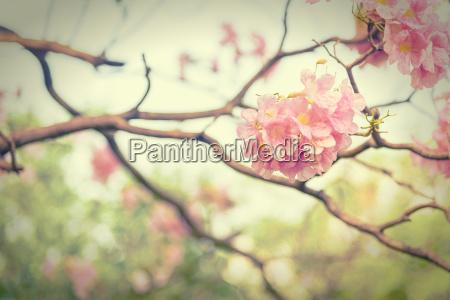 fiore di tromba rosa stile effetto