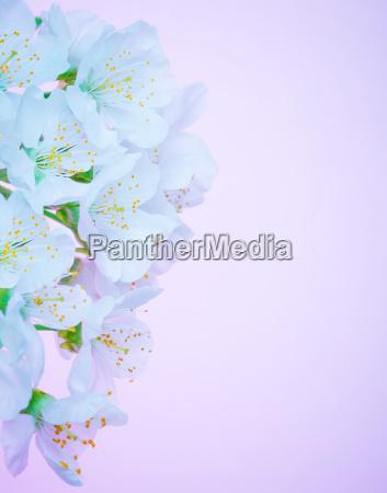 bella fioritura fiori bordo