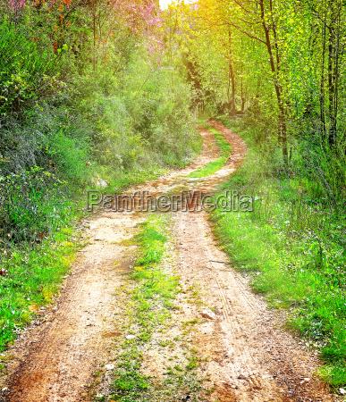estate libano paesaggio natura passerella foresta