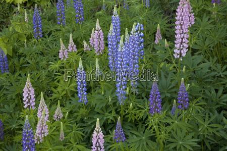 blu ambiente fiore pianta orizzontale primavera