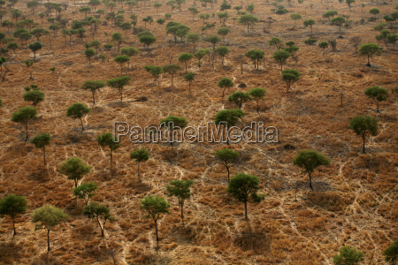 viaggio viaggiare albero africa savana allaperto
