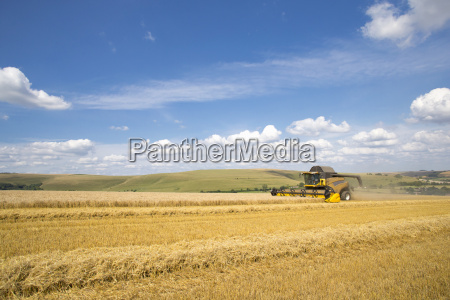 combine harvester harvesting wheat in sunny