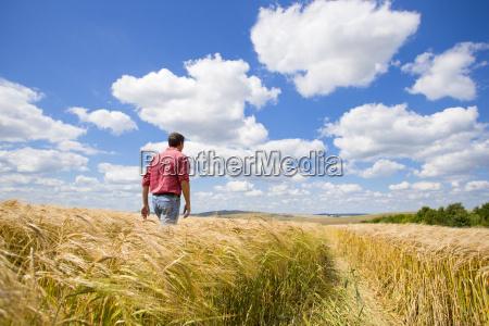 farmer walking through sunny rural barley