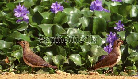 foglia animale uccello fiore pianta parco