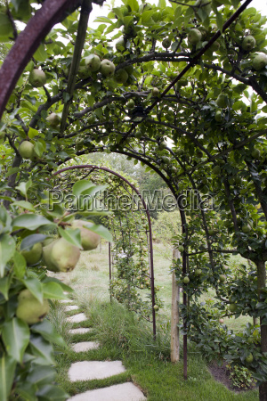 apples trees in a garden in
