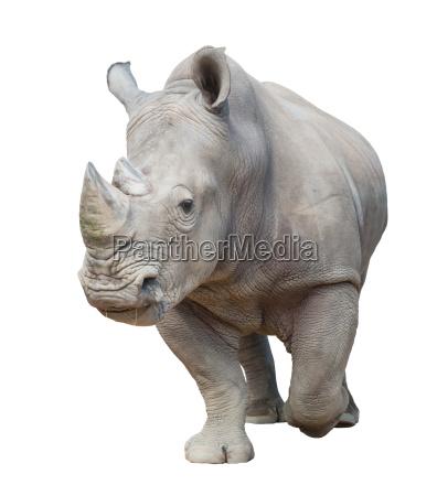 enorme rilasciato animale grande grosso appartato