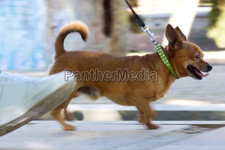 giovane donna e bel cane a