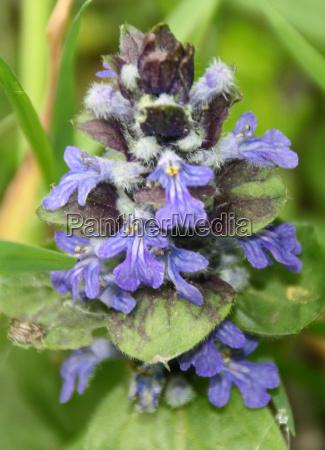 fioritura fiorire riserva naturale germania del