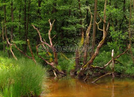 palude riserva naturale zona paludosa