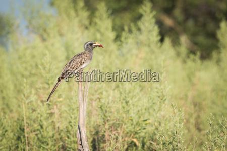 albero uccello africa animali savana luce