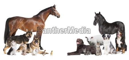 molti collage degli animali