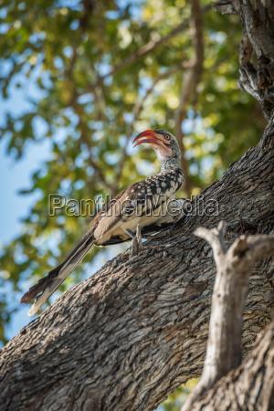 albero uccello africa tronco animali savana