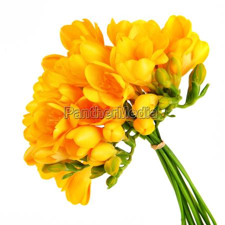 bouquet di bellissimi fiori gialli