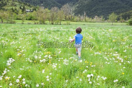 little boy with dandelions running in