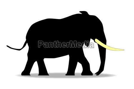 enorme mammifero elefante avorio zanna grande