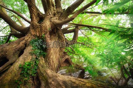 tronco di albero impressionante in bella