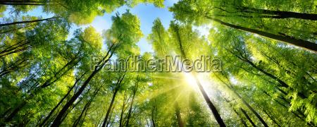 sole, splendente, sulle, cime, degli, alberi - 18129746