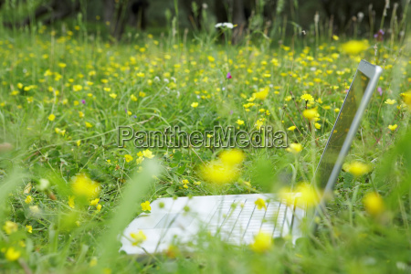 laptop in flower meadow