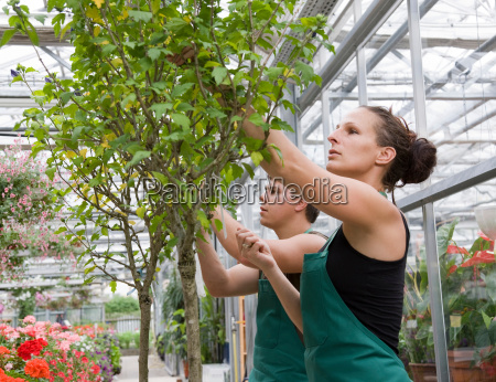 woman and man caring for tree