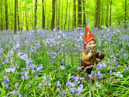 garden gnome in the woods