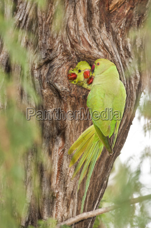 primo piano close up albero uccello