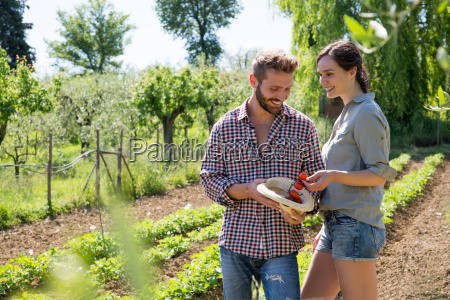 couple in vegetable garden putting tomatoes