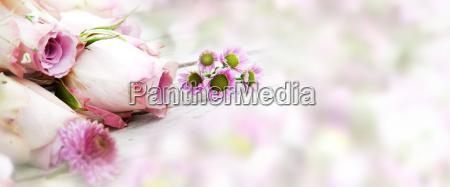 boda matrimonio flor flores planta rosas