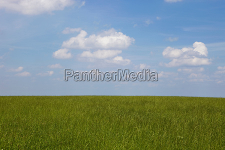 a field and sky