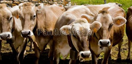viaggio viaggiare animale marrone agricoltura allaperto