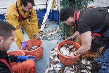 scientists inspecting catch of fish on