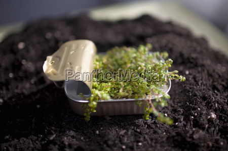 plant sprouting in sardine can