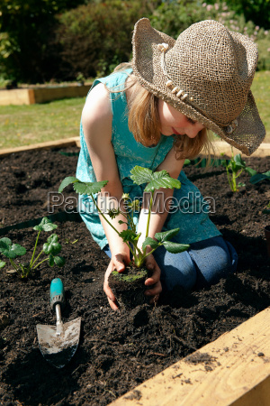 young girl planting strawberries