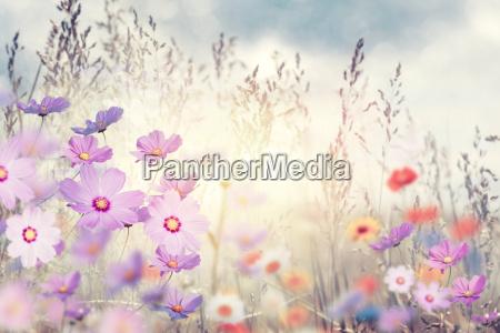 fiori selvatici al tramonto
