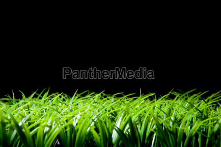 grass, and, black, background - 18613776