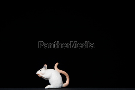 toy mouse on black background