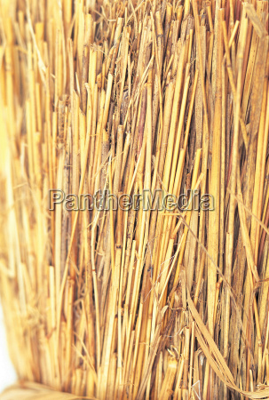 bundle, of, straw - 18642124