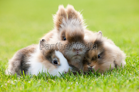 three rabbits sitting on grass
