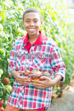 boy picking fresh tomatoes