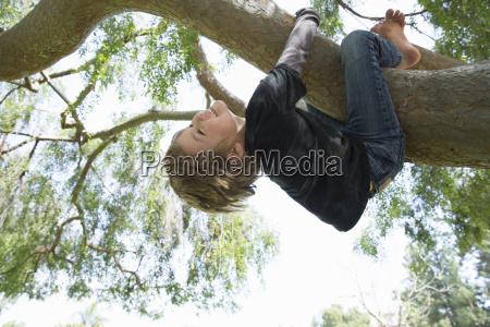 upside down boy wrapped around tree