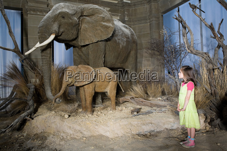 girl looking at elephants in a
