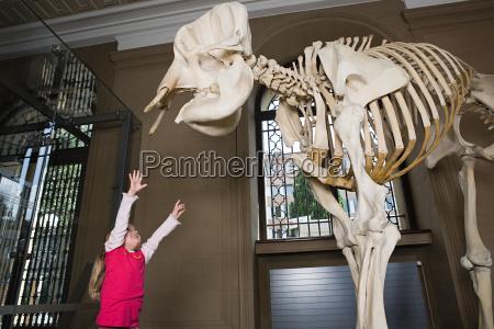 girl reaching for an elephant skeleton