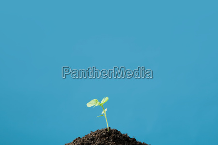 a growing plant