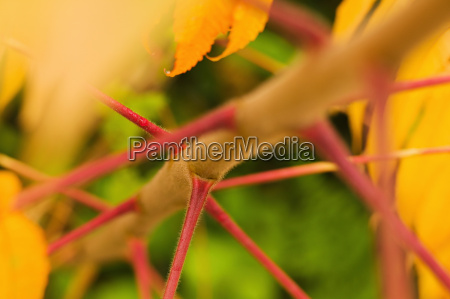 close up of a plant stem