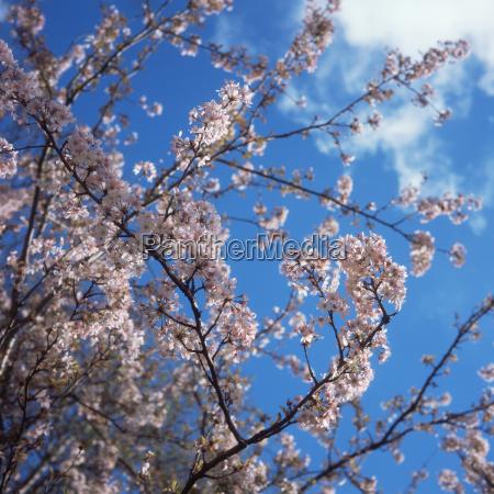 spring, blossom - 18849954