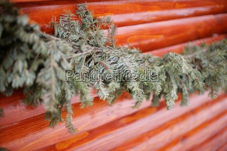 fir branch along a wooden wall
